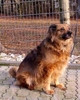 Doris Hundefreunde Ich Will Leben E V Tierheim Polen