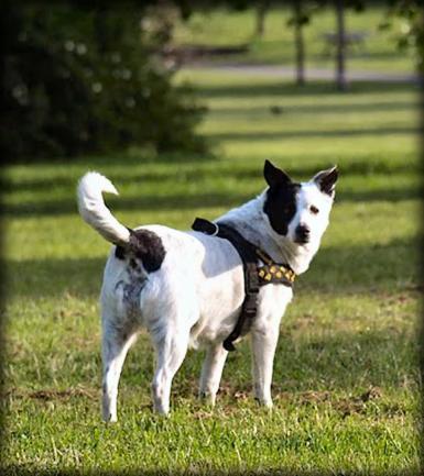 Hundefreunde kennenlernen